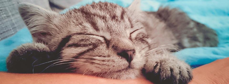 Dierenkliniek Oldenzaaal - dierenarts gespecialiseerd in honden en katten